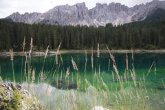 Karersee and grasses Stock Photos