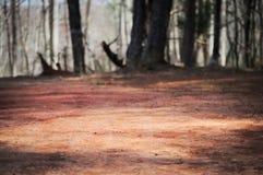 Karg röd jord med brutna träd Fotografering för Bildbyråer