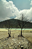 Kargt seende träd på stenigt svavel- golv av den vita krater Royaltyfria Foton