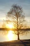 Kargt träd mot sjön på solnedgången Royaltyfri Fotografi