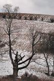 Kargt träd på en kall mitt--vinter dag framme av fältet som täckas lätt med snö Royaltyfri Foto