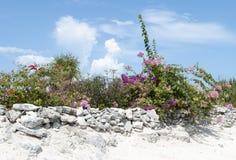 Karibikinsel-Blumen Stockfoto