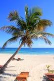 Karibische KokosnussPalmen im tuquoise Meer Stockbild