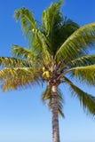 Karibische Meere, Kuba Lizenzfreie Stockfotografie