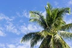 Karibische Meere, Kuba lizenzfreie stockbilder
