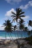 Karibische Palmen lizenzfreie stockfotos