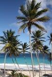 Karibische Palmen stockfotografie