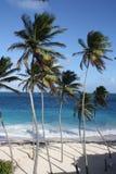 Karibische Palmen (hoch) lizenzfreie stockfotografie