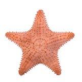 Karibische Starfish lokalisiert auf weißem Hintergrund, Weg lizenzfreies stockfoto