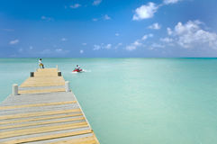 Karibische Strahlen-Skis Stockfotografie