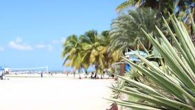 Karibischer Strand stock video