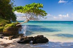 Karibischer Strand an einer Luxuxrücksortierung Lizenzfreies Stockbild