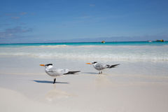 Karibischer Strand Mexiko Tulum Stockfoto