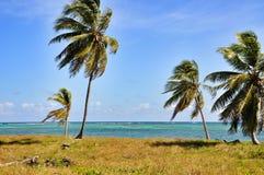 Karibischer Strand mit einem langen von Palmen Lizenzfreie Stockfotografie