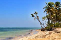 Karibischer Strand mit lange Palmen und weißer Sand Lizenzfreies Stockfoto