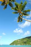 Karibischer Strand mit Palme Stockfotos