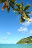 Karibischer Strand mit Palme Lizenzfreies Stockfoto