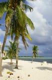 Karibischer Strand mit Palmen und Kokosnüssen Lizenzfreie Stockfotografie