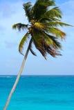 Karibischer Strand mit Palmtree stockfotos