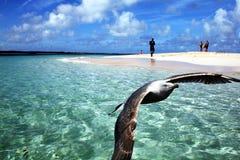 Karibischer Traum lizenzfreie stockfotos