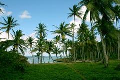Karibischer verlassener Strand Stockbild