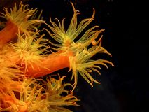 Karibisches Korallenriff Stockfoto