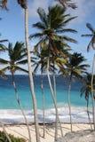 Karibisches Palm Beach lizenzfreie stockbilder