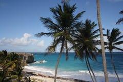 Karibisches Palm Beach stockfoto