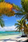 Karibisches Paradies Stockfoto