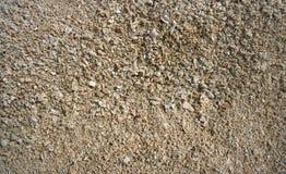 Karibisk detalj för strandsandskal Royaltyfri Foto
