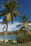Karibisk hamn som omges av kokosnötpalmträd fotografering för bildbyråer