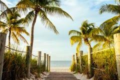 karibisk kokosnötcuba palmträd Royaltyfri Fotografi