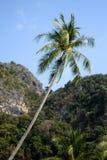 karibisk kokosnötcuba palmträd Arkivbilder