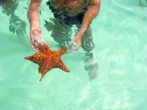 Karibisk sjöstjärna Arkivfoto