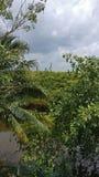 Karibisk skog arkivbild