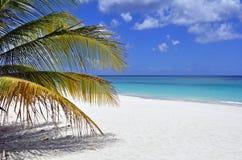 Karibisk strand. Arkivbild
