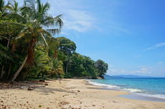 Karibisk strand med frodig vegetation Costa Rica Arkivfoto
