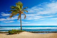 Karibisk strand och tropiskt hav i Haiti arkivbilder