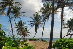 Karibisk strand, St. Croix, USVI fotografering för bildbyråer