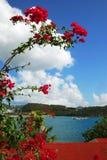 karibiska blommor Fotografering för Bildbyråer