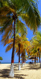 Karibiska stränder Arkivbild