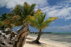karibiskt Arkivbilder