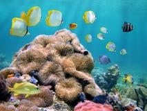 karibiskt färgrikt hav Arkivfoto