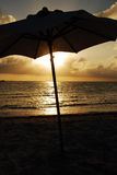 karibiskt paraply Arkivbild