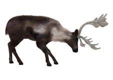kariboe Stock Foto's