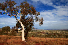 karijini park pilbara australii Obrazy Royalty Free