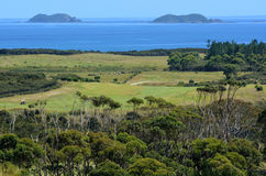 Karikari半岛-新西兰 库存照片