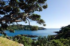Karikari halvö - Nya Zeeland Royaltyfri Fotografi