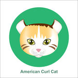 Karikatur-amerikanische Locken-Katze in der Kreis-Vektor-Illustration Stockfoto