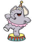 Karikatur-Elefantzirkus Stockfoto